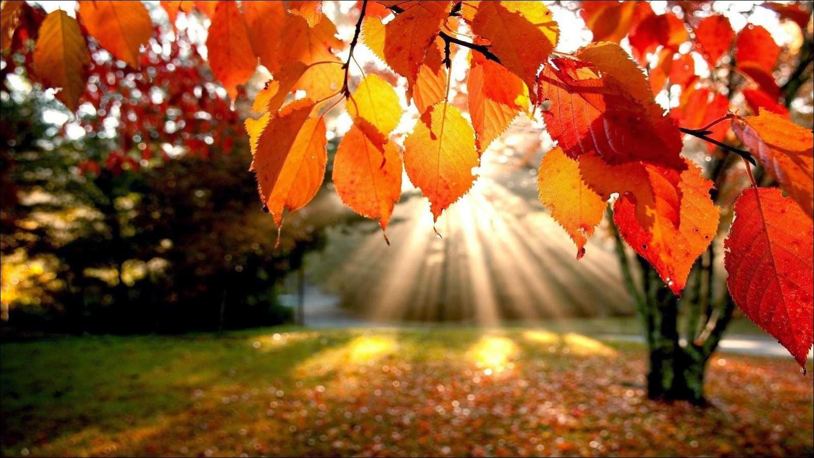 dibujos gratis de otoño para colorear