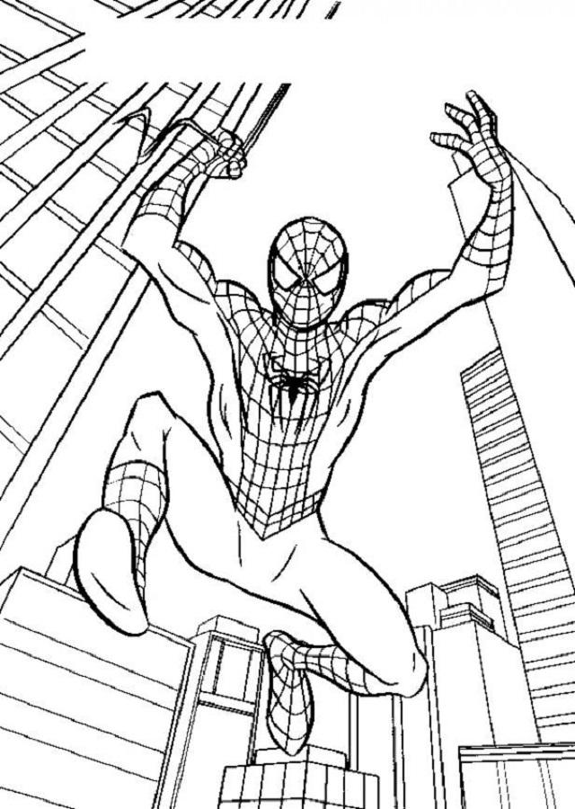imagen para colorear spiderman extendiendo su tela de araña