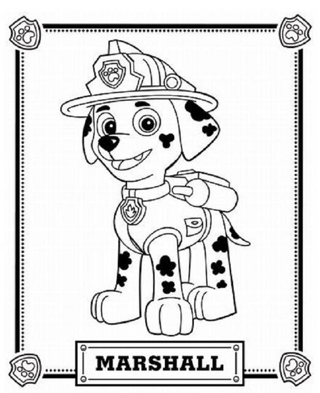 Marshall de la patruya canina