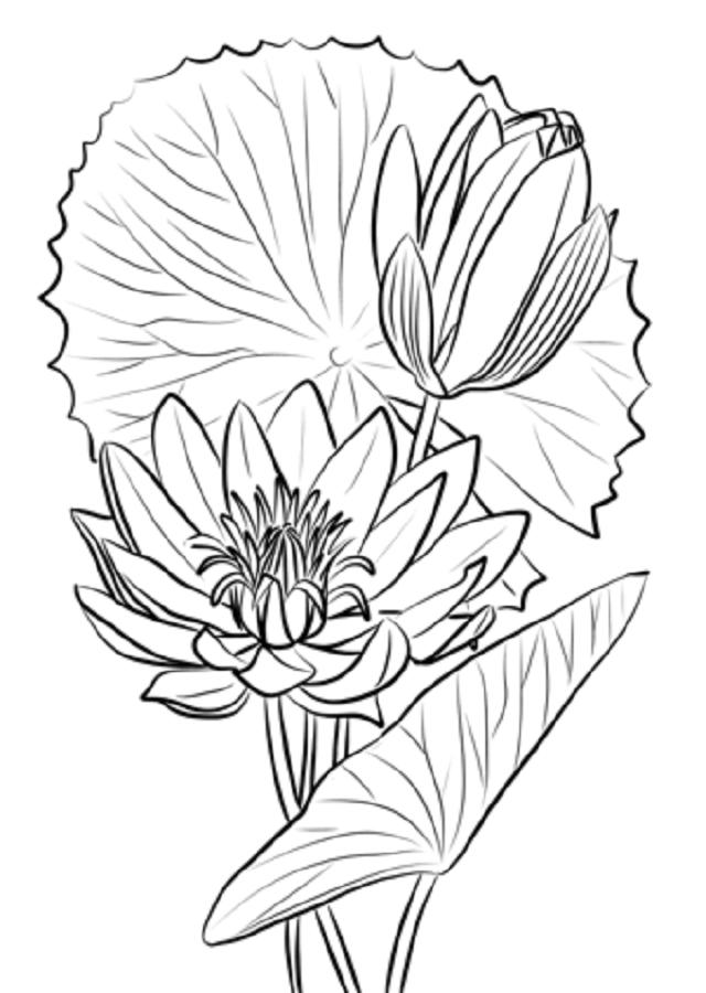 La Flor de Loto es una planta nativa de Asia, que posee una gran simbología a su espalda, actualmente la imagen de la flor es usada en tatuajes, pinturas entre otros, hasta ha servido de musa a importantes músicos para componer hermosas canciones, es este articulo aprenderás todo lo relacionado con el Significado de la Flor de loto, continúa leyendo y amplia tus conocimientos acerca del simbolismo de esta.