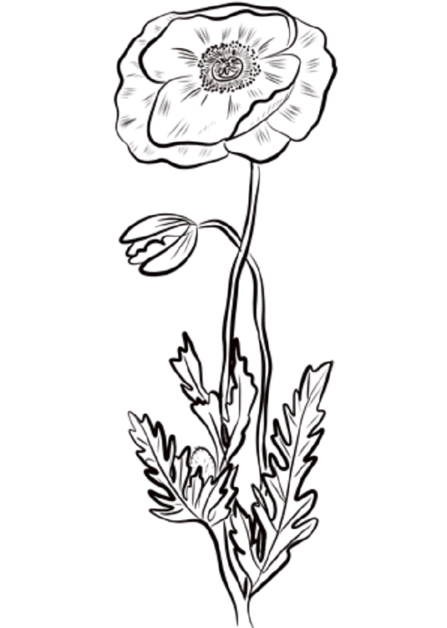 Flores Para Colorear Dibujos Para Colorear
