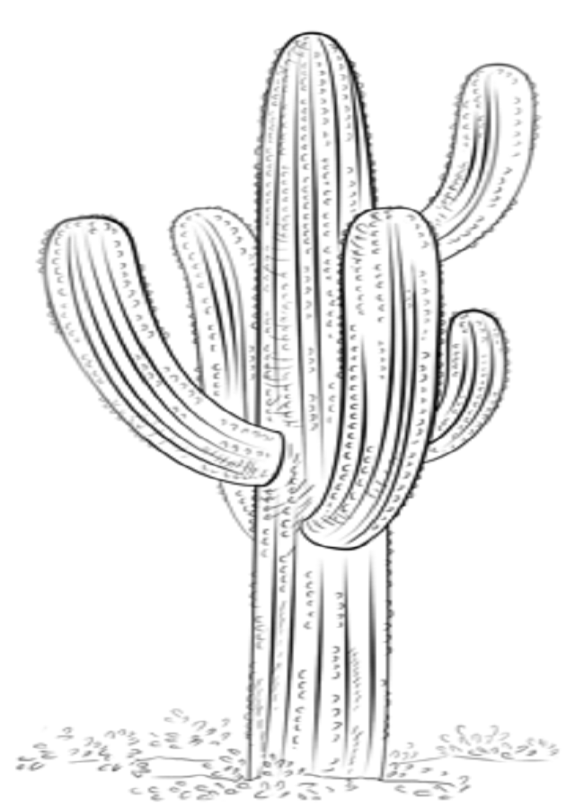 cactus - Dibujos para colorear