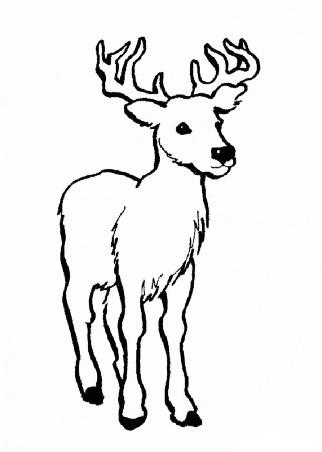 Único Ciervos Para Colorear Motivo - Dibujos Para Colorear En Línea ...