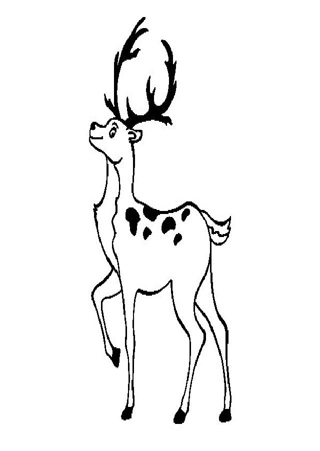 ciervo-para-pintar - Dibujos para colorear