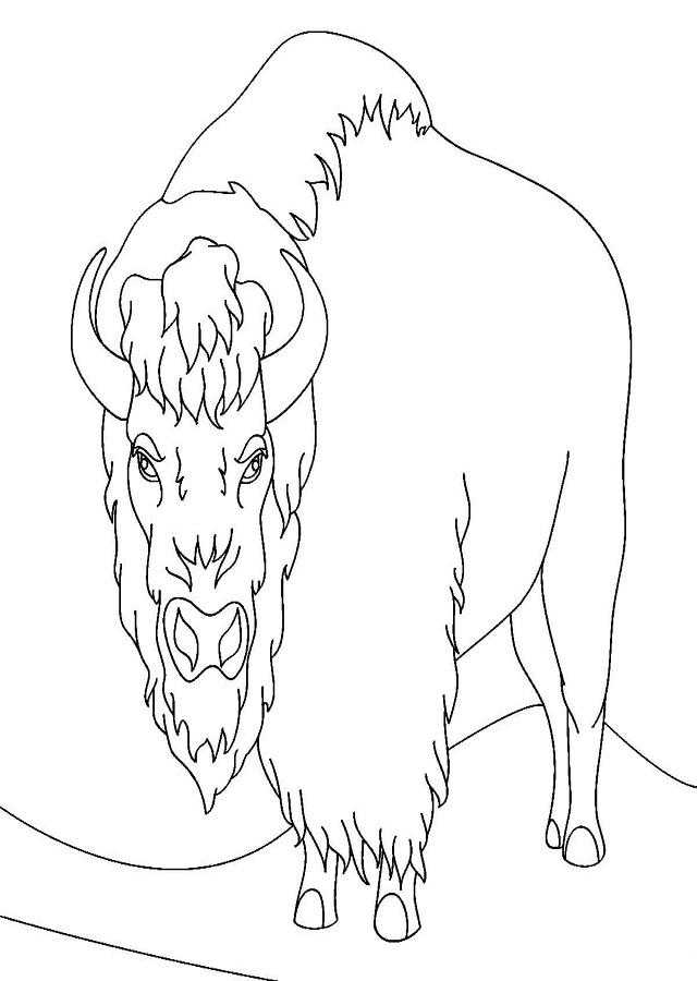 dibujo bisonte americano - Dibujos para colorear