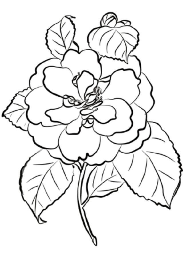 Flores para colorear dibujos para colorear for Plantas ornamentales para colorear