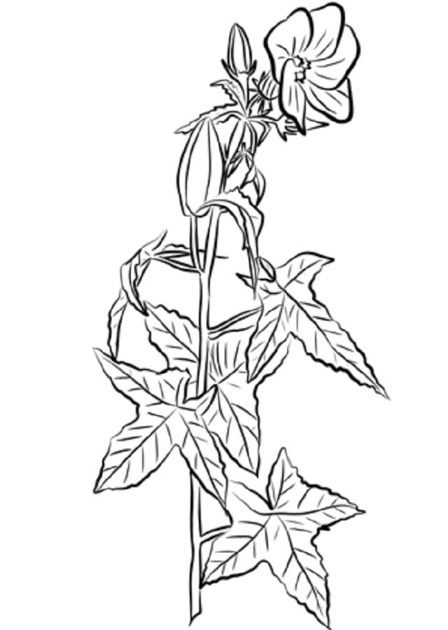 Son flores muy características, ya que no sólo disponen de una gran variedad de colores. Además, su estambre es mayor que la corola y sus pétalos son de gran tamaño.