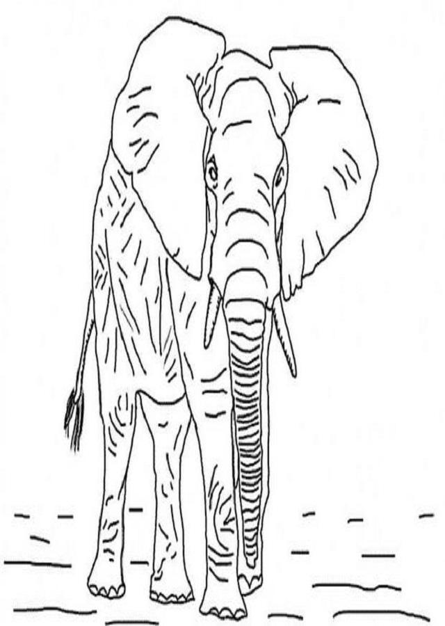 Animales Salvajes Dibujosparacolorear Eu