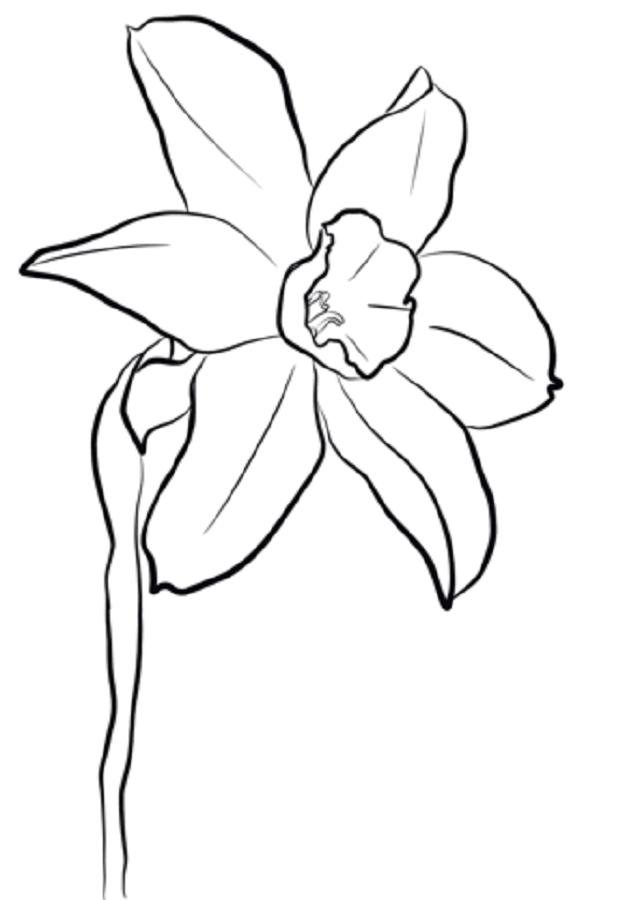 El Narciso es indicativo de renacimiento, nuevos comienzos y la vida eterna. También simboliza el amor no correspondido. Un único narciso predice una desgracia mientras que un ramo de narcisos indica alegría y felicidad.