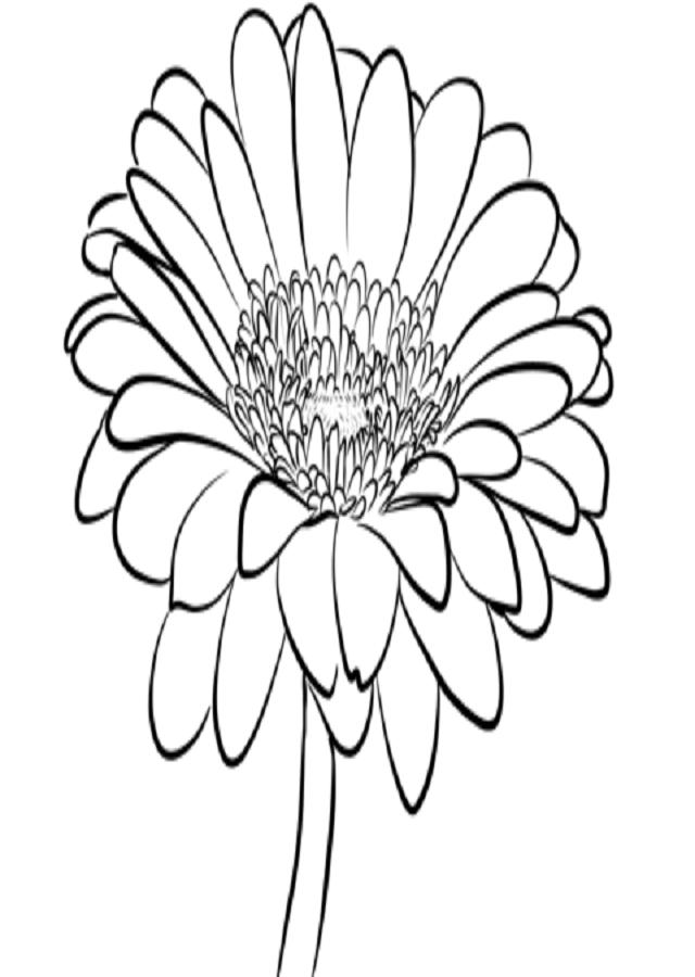 Todos sabemos que la Margarita simboliza la pureza, la inocencia, un nuevo comienzo y alegría. Esta planta originaria de las Islas Canarias, proviene de la familia de las compuestas como los Crisantemos, las Caléndulas, las Coquetas, etcétera. Quienes están enamorados han deshojado en alguna oportunidad los pétalos de la margarita y, por ello, a continuación, te dejaré no solo el significado de ella, sino también las características y los cuidados para que puedas cultivarla en casa.