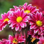 Blumen zu malen und zu färben