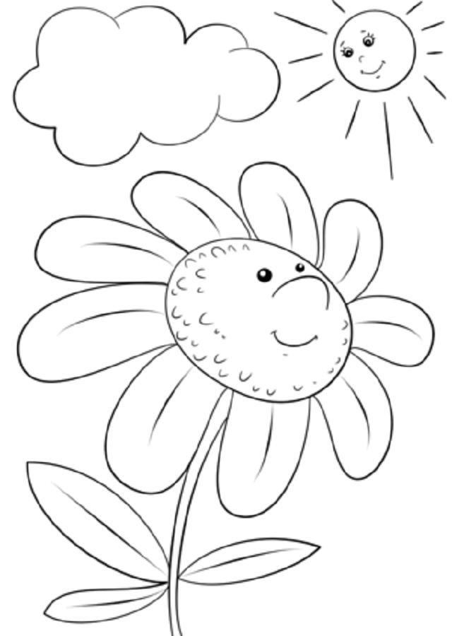 La Margarita es un arbusto leñoso muy ramificado y de copa globosa, que puede llegar a medir de 0,50 a 1,50 m de altura. Sus hojas son bipinnadas de 5-10 cm de largo y sus flores están reunidas en capítulos de 3-5 cm de diámetro con flores en el centro de color amarillo y periféricas blancas.
