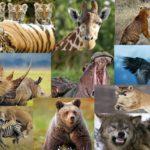 animales salvajes para colorear