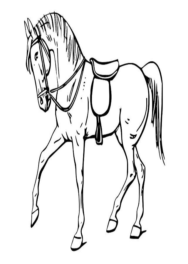 dibujo para colorear caballo trotando