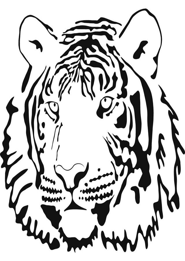 Tigre Para Colorear Dibujos Para Colorear