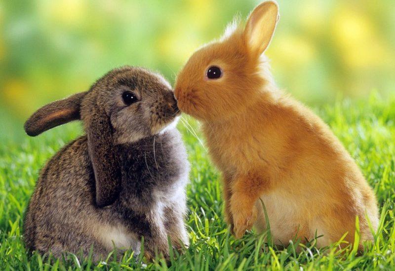 Conejos Para Colorear Dibujos Para Colorear