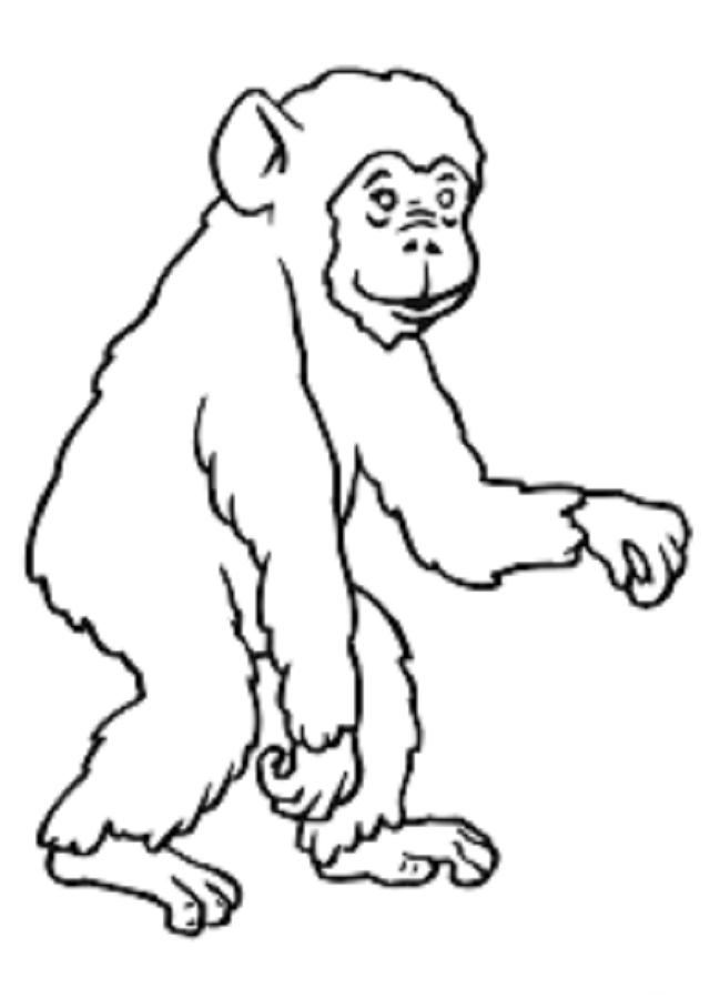 dibujo-chimpance-para-pintar - Dibujos para colorear