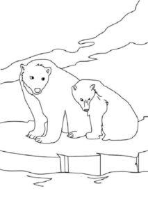 Dibujo Oso Polar Para Colorear