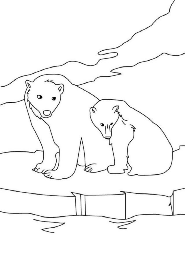 Dibujos Osos Polares Para Colorear Dibujos Para Colorear