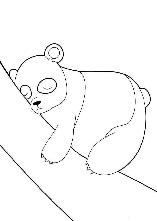 ▷Osos pandas para colorear - Dibujos para colorear
