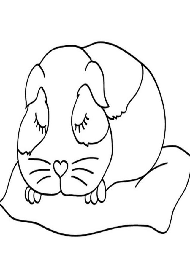 Hamster Para Colorear Dibujos Para Colorear