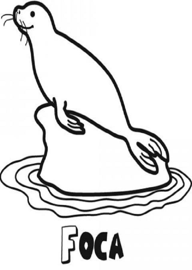 dibujo foca para pintar subida en hielo