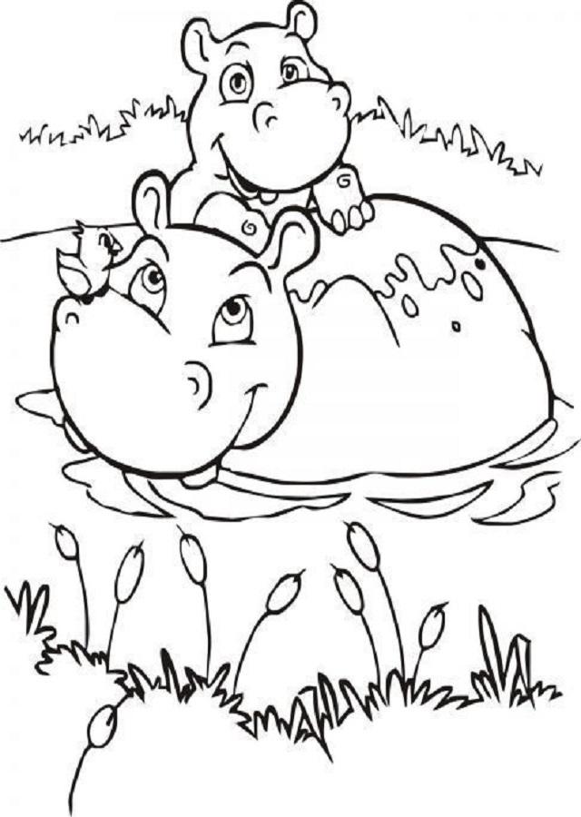 dibujos-para-colorear-hipopotamo - Dibujos para colorear