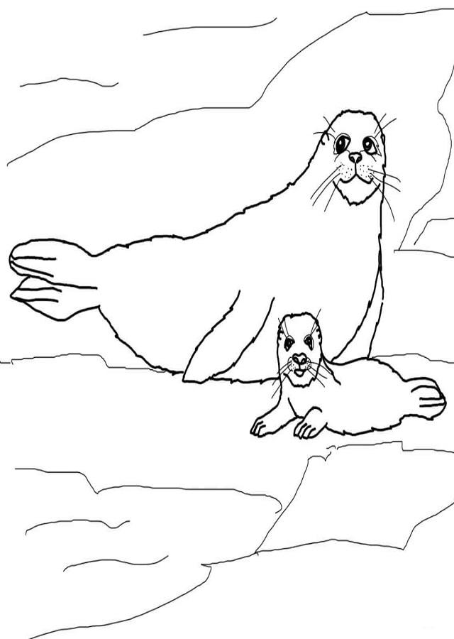 dibujo para colorear mama foca con su hijo