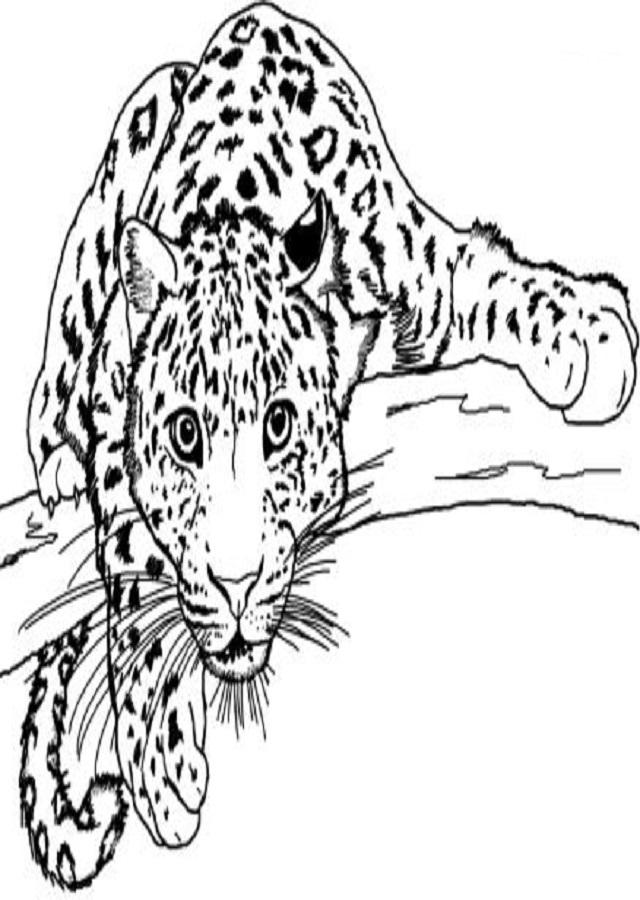 Leopardo Para Colorear Dibujosparacolorear Eu