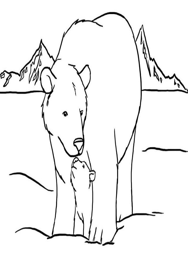 ▷dibujos osos polares para colorear - Dibujos para colorear