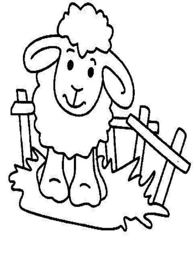 oveja-para-pintar - Dibujos para colorear