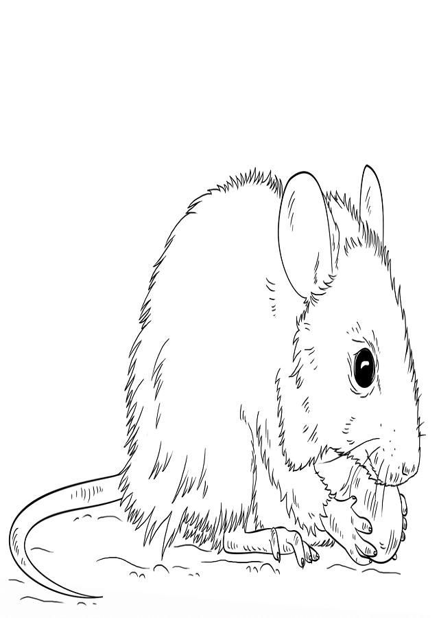 raton-para-pintar - Dibujos para colorear