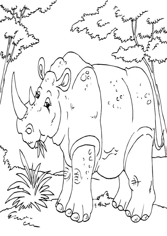 dibujo para colorear rinoceronte comiendo hierba