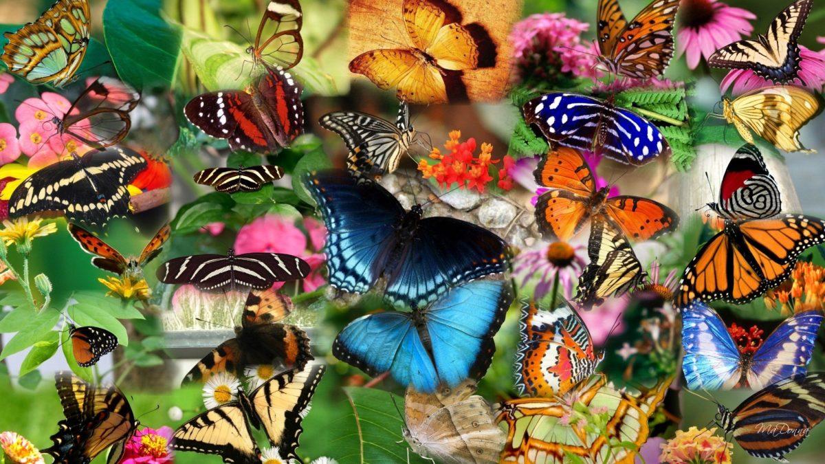 mariposas para pintar